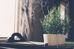 Incense smoke and houseplants Stock Photography