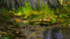 Incense smokes at a stream flowing through a sunny autumn forest. Follow focus. Incense smokes near a stream, which flows through a sunny autumn birch forest stock video footage