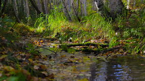 Incense smokes at a stream flowing through a sunny autumn forest. Follow focus. Incense smokes near a stream, which flows through a sunny autumn birch forest stock footage