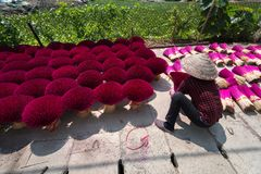 Incense sticks drying outdoor with Vietnamese woman wearing conical hat in north of Vietnam Royalty Free Stock Photography