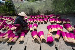 Incense sticks drying outdoor with Vietnamese woman wearing conical hat in north of Vietnam Royalty Free Stock Photos
