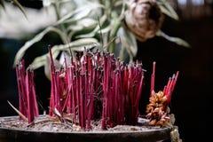 Incense sticks in the incense burner Royalty Free Stock Image