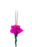 Incense sticks for kratong. Royalty Free Stock Images