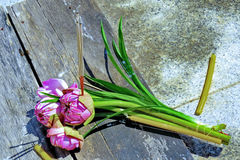 Incense sticks placed on lotus for ordained ceremony. Incense sticks placed on lotus the front of the church for newly ordained ceremony royalty free stock image