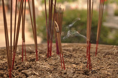Incense was planted in pots . Royalty Free Stock Photo