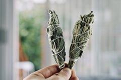 Incense of white salvia. White salvia incense. Salvia ritual concept. White sage, scared sage, california sage, bee sage Stock Photo
