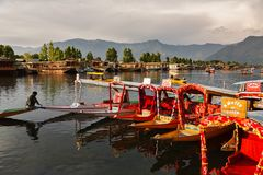 Inchaço colorido de Shikara no lago Dal, Kashmir foto de stock royalty free