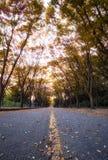 Incheon μεγάλη πτώση γωνίας πάρκων χαμηλή Στοκ εικόνες με δικαίωμα ελεύθερης χρήσης