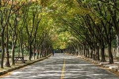 Incheon Grand Park early autumn Royalty Free Stock Photos