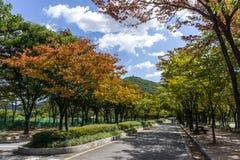 Incheon Grand Park early autumn Royalty Free Stock Photo