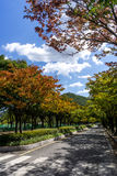Incheon Grand Park early autumn Stock Image