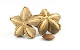 Inchi de Sacha, arachide de Sacha ou arachide de montagne photos stock