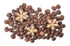 Inchi Sacha, sacha mani или семя арахиса inca звезды на белой предпосылке Стоковые Фотографии RF