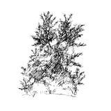 inchiostro della penna di schizzo di progettazione grafica della latifoglia Fotografia Stock