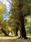 Incidence d'automne Photos libres de droits