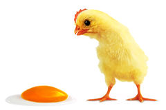 Incident with egg. Cockalorum and incident with egg stock photo