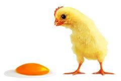 Incidente con el huevo Foto de archivo