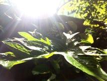 Incidente della luce di Sun Fotografia Stock Libera da Diritti