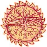 Incidere di Sun del campo delle radici della pianta illustrazione vettoriale