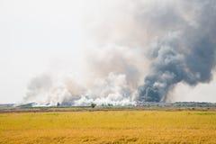 Incineração Waste Fotografia de Stock Royalty Free