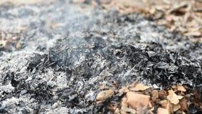 Incinere la basura y las hojas Causar la contaminación atmosférica almacen de metraje de vídeo