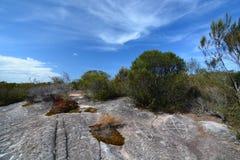 Incisione aborigena della roccia parco nazionale di inseguimento dell'Ku-anello-gai Il Nuovo Galles del Sud l'australia fotografie stock libere da diritti