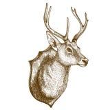 Incisione della testa della renna su fondo bianco Fotografia Stock Libera da Diritti