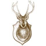 Incisione della testa farcita della renna su fondo bianco Fotografie Stock