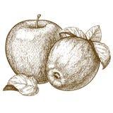Incisione due mele e foglie rosse Immagini Stock