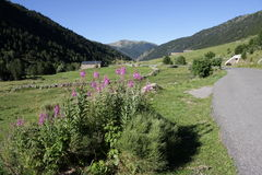 Incles valley in Andorra Stock Photography