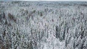 Inclinação alta da câmera do voo acima sobre grandes madeiras no inverno frio vídeos de arquivo