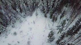 Inclinação alta da câmera do voo acima sobre grandes madeiras no inverno frio filme