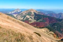 Inclinação da grama da montanha no vale de Vratna imagens de stock royalty free