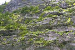 Inclinação da montanha Fotografia de Stock