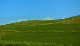 Inclinação de Montain com ervas da mola Foto de Stock Royalty Free