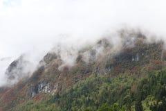 Inclinação de montanha com árvores, Bohinj, Eslovênia, Europa fotos de stock royalty free