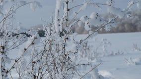 A inclinação disparou acima com steadycam - plantas cobertas com a neve no campo Natureza do inverno video estoque
