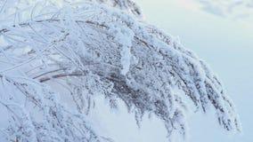 A inclinação disparou acima com steadycam - plantas cobertas com a neve no campo Natureza do inverno filme