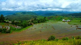Inclinação larga da paisagem da inclinação do campo do arroz do lapso de tempo de Hd acima video estoque