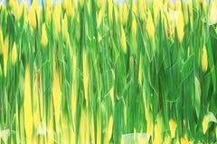 Inclinação verde fresco da folha da mola do borrão Foto de Stock Royalty Free