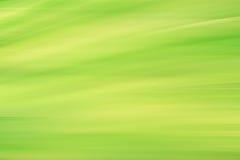 Inclinação verde fresco da folha da mola do borrão Foto de Stock