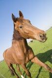 Inclinación del caballo fotografía de archivo