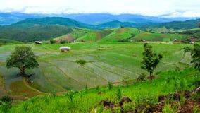 Inclinación del paisaje de la cuesta del campo del arroz del lapso de tiempo de Hd para arriba almacen de metraje de vídeo