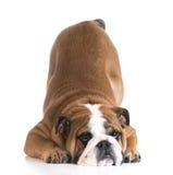 Inclinación del perro fotografía de archivo libre de regalías