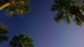 Inclinación lenta del día de la calma del cielo del ble de las palmeras abajo almacen de metraje de vídeo