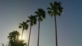 Inclinación lenta del día de la calma del cielo del ble de las palmeras abajo metrajes