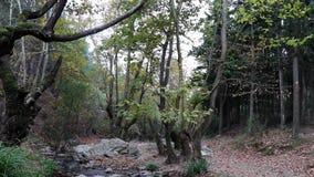 Inclinaison tirée de la forêt en automne Arbres et eau entrant dans la rivière, mouvement lent banque de vidéos