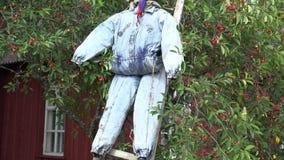 Inclinaison vers le haut d'?pouvantail de chiffon accrocher l'?chelle en bois sur la cerise dans le jardin 4K clips vidéos