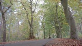 Inclinando colpo che comincia al livello della strada, di viale circondato dai bei alberi verdi e gialli stock footage