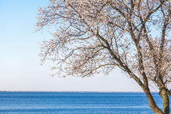 Inclination tree on riverbank. Tree with sloping branch stands on the bank of a wide river summer day Royalty Free Stock Photos